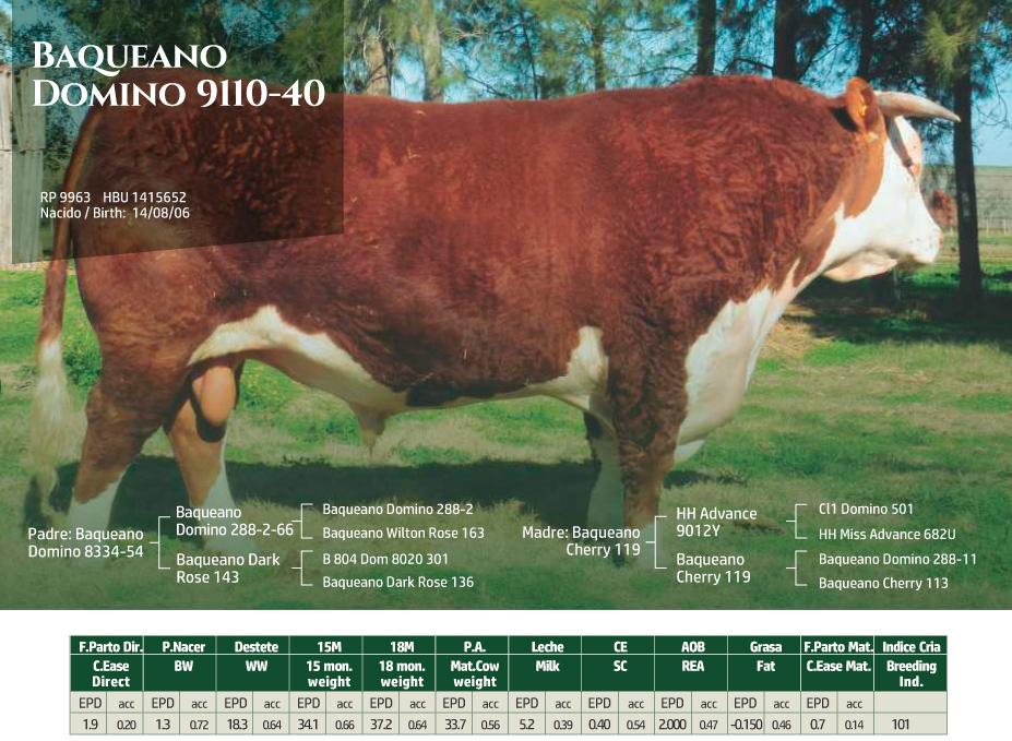 BaqueanoDomino-9110-40