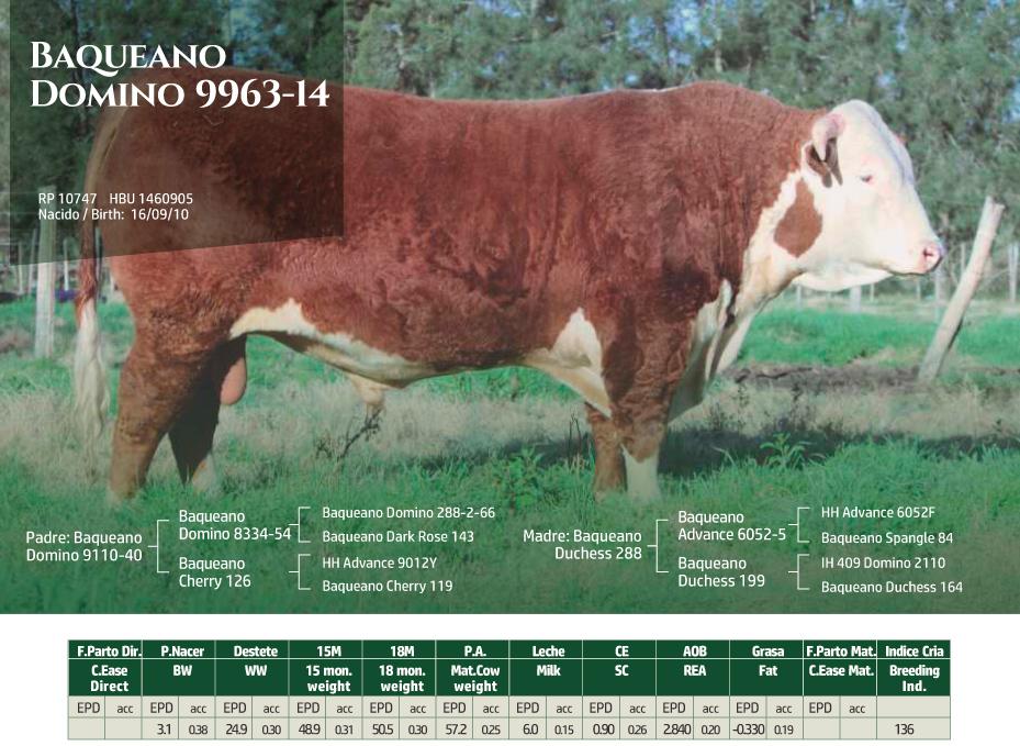 BaqueanoDomino-9963-14